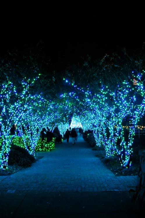 Atlanta Botanical Garden Lights Photograph Botanical Garde
